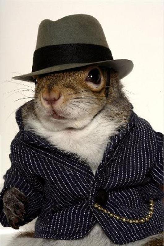 Animales vestidos: Ardillas modelos