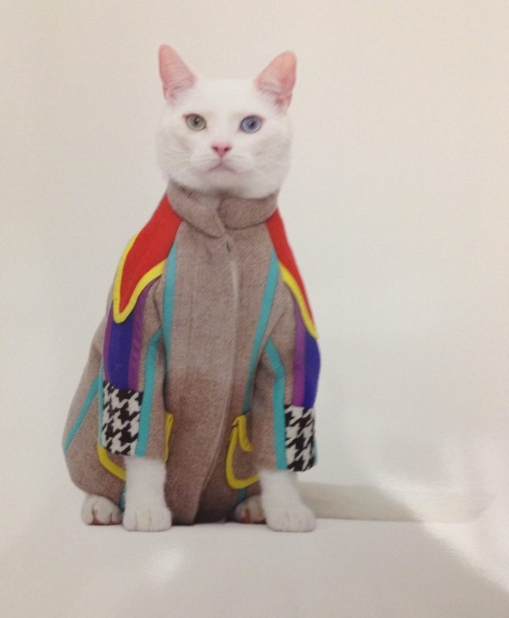 Gatos con ropa para el calendario de United Bamboo