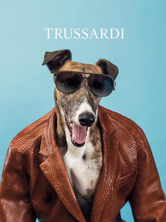 La campaña perruna primavera/verano 2014 de Trussardi