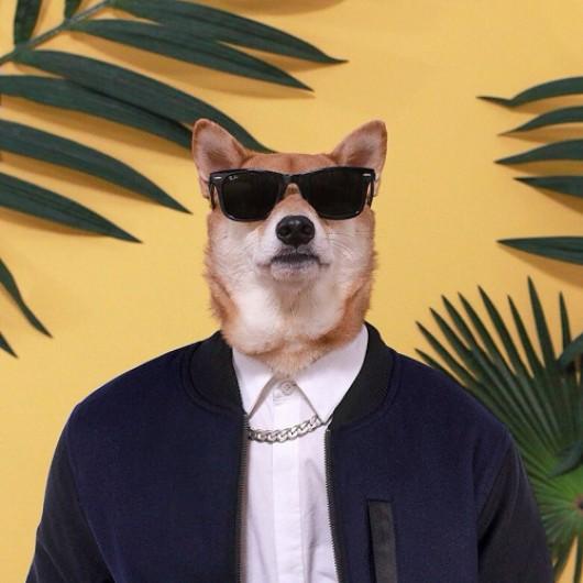 Bodhi, la historia del perro tras 'The Menswear Dog' que se convirtió en estrella