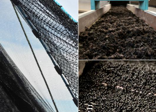 Karün y Bureo presentan la primera línea de anteojos reciclados hechos a partir de redes de pesca