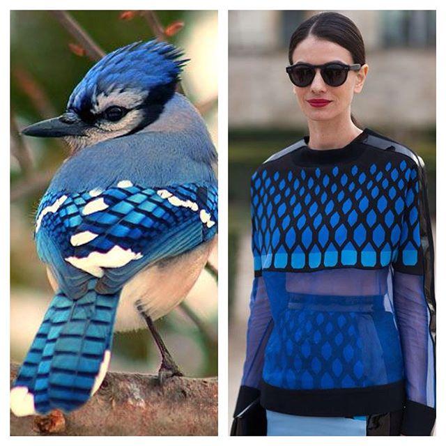 #Fashionature, imágenes que capturan la inspiración natural tras la moda