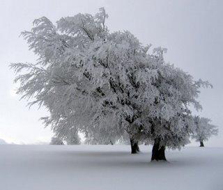 Historia y significado del color: Blanco