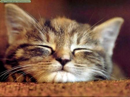 Piel de gato