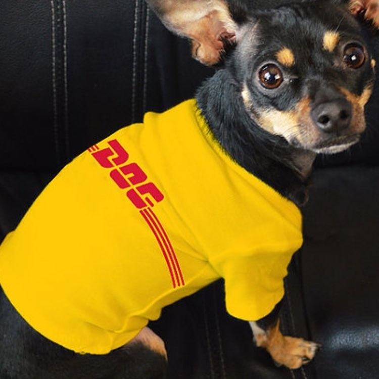Petements, la marca más cool para vestir a tus mascotas