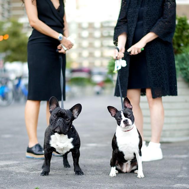 The Dogist, el sitio web que registra el street style de los perros de Nueva York