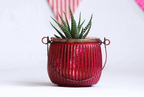 The Cacto Store – Plantas y decoración