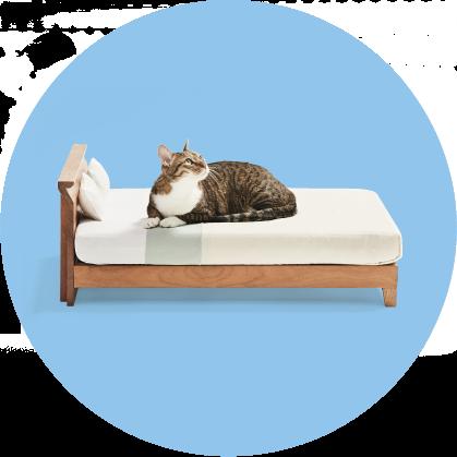 Muebles para gatos, la original campaña japonesa para promover su artesanía